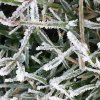 Winter in DGC